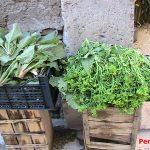 verdura km zero Venosa